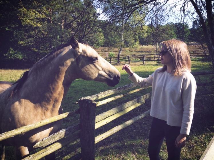 Jag träffar en häst i Undeloh