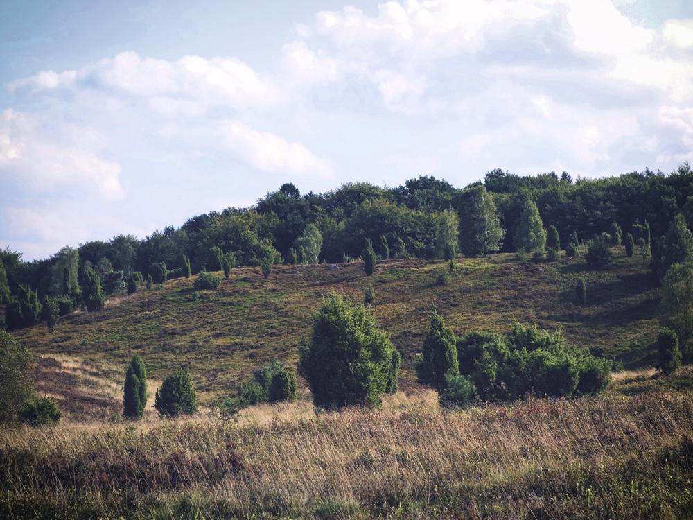 Lüneburger Heide_Landskap2