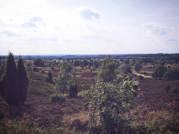 Lüneburger Heide_Landskap 3