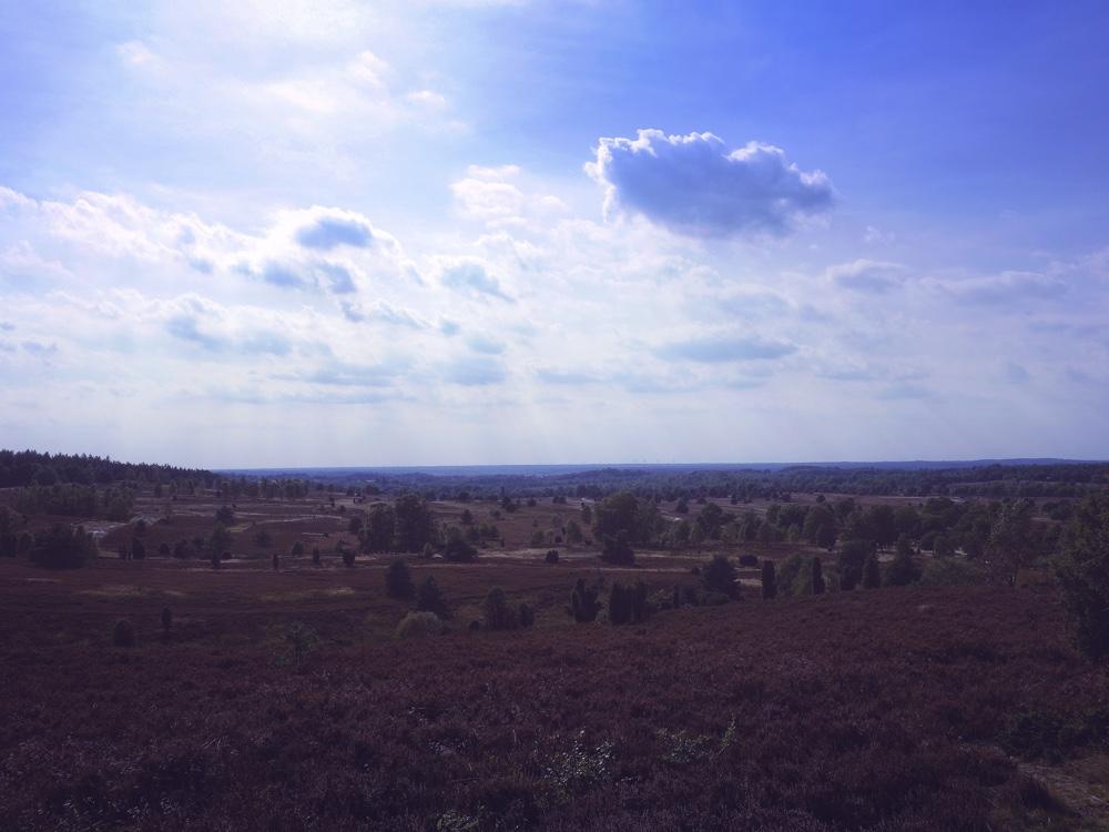 Landskapet Lüneburger Heide