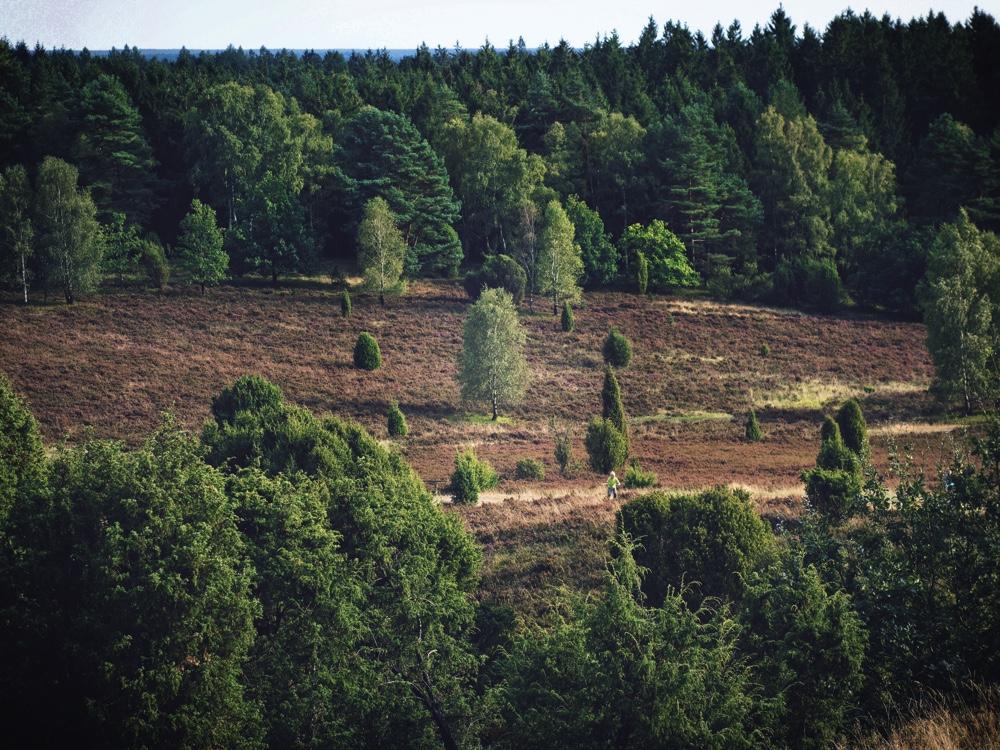 Totengrund_Björkträd