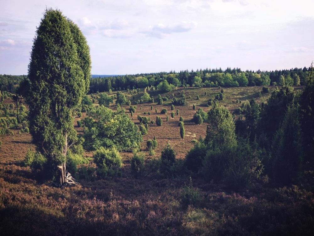 Lüneburger Heide_Totengrund