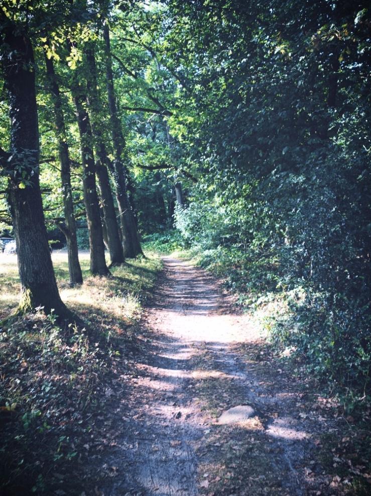 Lüneburger Heide_Ljus genom träd