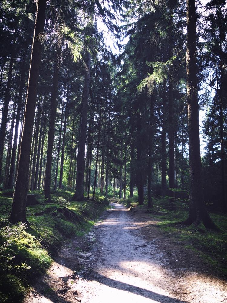 Skogen i Lüneburger Heide
