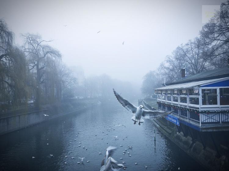 Duva över Landwehrkanal
