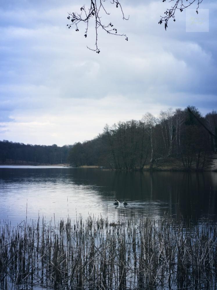 Kättjefulla fåglar vid Liepnitzsee